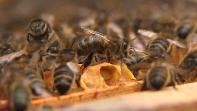como espantar abelhas