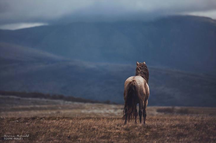Fotos de Cavalos