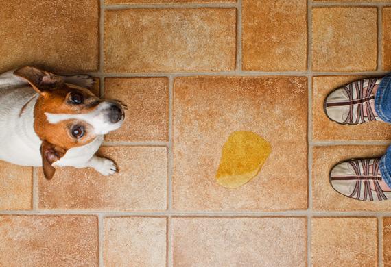 tirar o cheiro de cachorro de casa